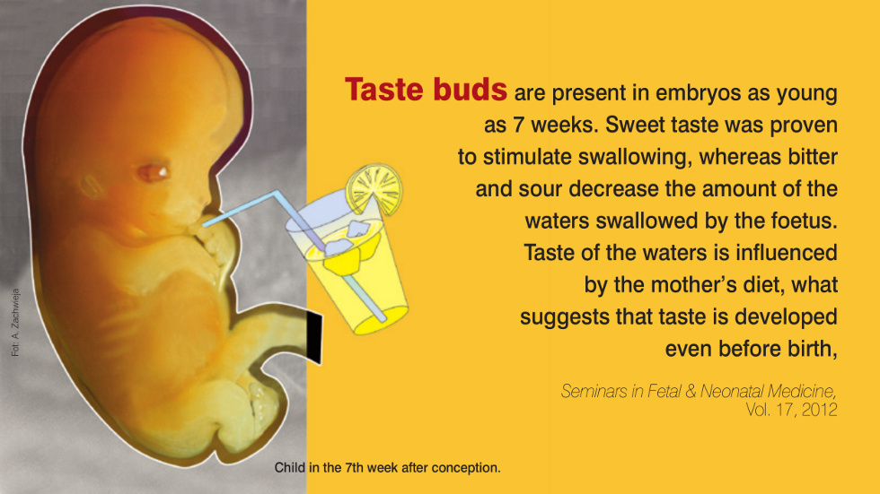 Taste buds are present in embryos as young as 7 weeks